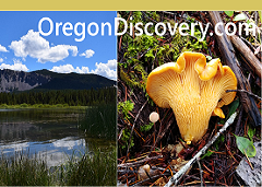 Oregon Discovery
