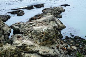 Риф Симпсона & Остров Шел @ Simpson Reef