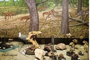 Овечья гора   Sheep Rock - Палеонтологический центр
