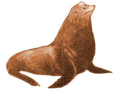 Риф Симпсона - Калифорнийский морской лев