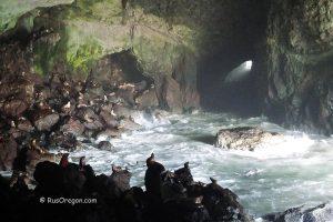 Пещеры морских львов - Sea Lion Caves