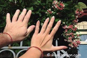 Тайна пропорции пальцев рук