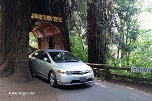 Национальный парк Редвуд - Redwood National Park
