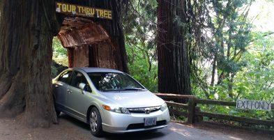 Национальный парк Редвуд – Калифорния