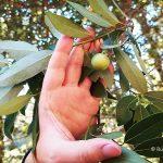 Murtle Tree Oregon